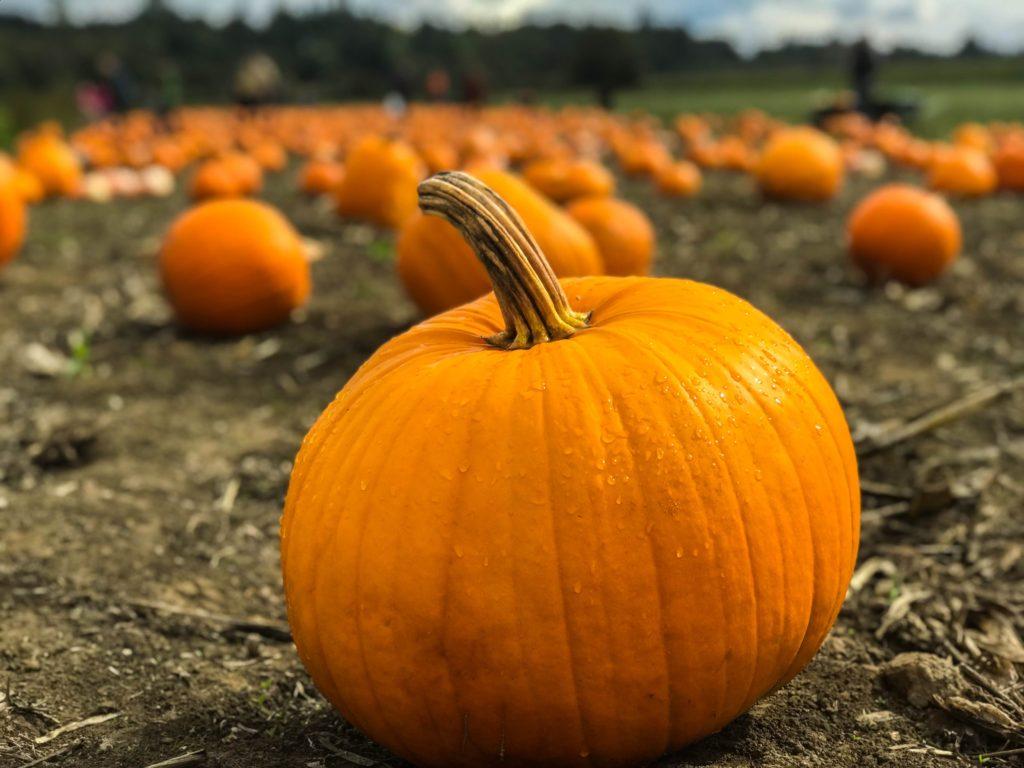 seasonal fall foods and how to use them - pumpkin